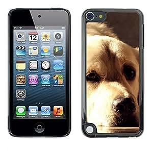 Vortex Accessory Carcasa Protectora Para Apple Ipod Touch 5 - Golden Retriever Labrador Sunlight Face Dog -