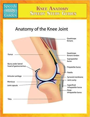 Buy knee anatomy speedy study guides book online at low prices in buy knee anatomy speedy study guides book online at low prices in india knee anatomy speedy study guides reviews ratings amazon ccuart Image collections