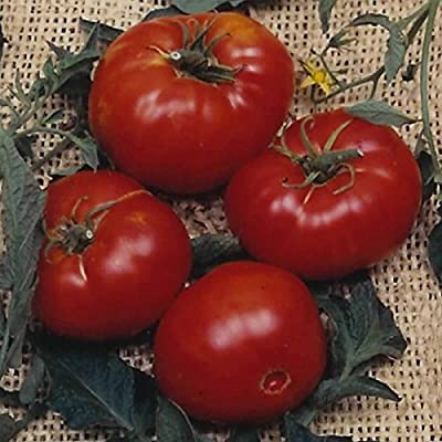 Tomato Garden Seeds - Brandywine Red - Non-GMO, Heirloom Vegetable Gardening Seed