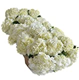 Farm2Door: 30 Fresh White Hydrangeas (Naturally Colored) from Colombia - Farm Direct Wholesale Fresh Flowers