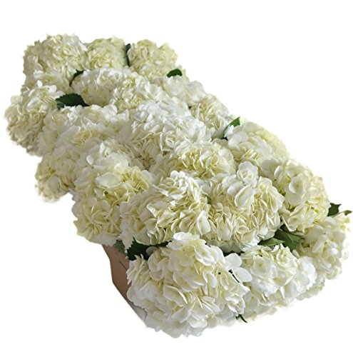 Farm2Door Farm-Fresh Hydrangeas: 30 Fresh White Hydrangeas (Naturally Colored) from Colombia - Farm Direct Wholesale Fresh Flowers