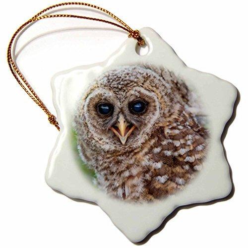 Angel Ornaments Danita Delimont - Birds - Fledgling barred owl in Everglades National Park, Florida, USA - inch Snowflake Porcelain Ornament (Naples Florida Gift Baskets)