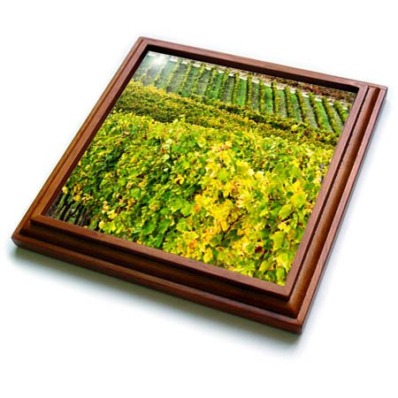 3dRose Danita Delimont - Vineyards - Italy, Tuscany, Chianti, Rows of wine grape vines in a vineyard. - 8x8 Trivet with 6x6 ceramic tile ()