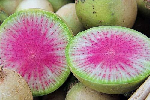 100 Watermelon Radish Seeds Very Unique Radish
