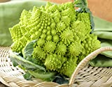 buy Seeds Cabbage Broccoli Romanesco Cauliflower Beautiful Vegetable Organic Heirloom Ukraine for Planting now, new 2020-2019 bestseller, review and Photo, best price $6.99