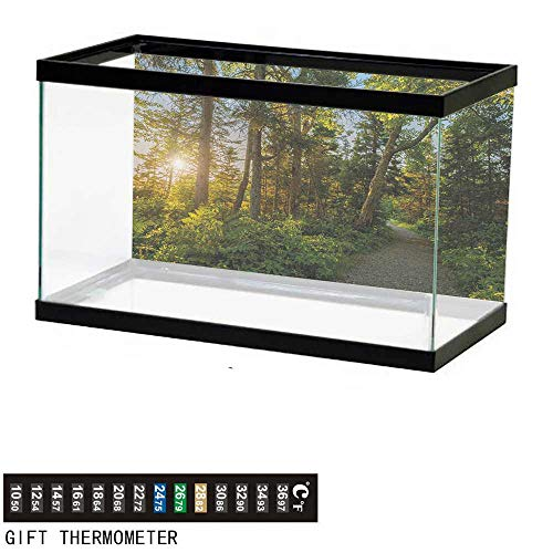 - wwwhsl Aquarium Background,Landscape,National Park in Cape Breton Highlands Canada Forest Path Trees Tranquility Photo,Blue Green Fish Tank Backdrop 24