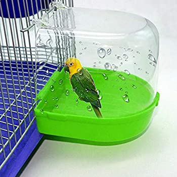 Amazon Com Bird Bath With Mirror Toy For Pet Small