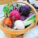 New Seeds 2015!Rare Beetroot seeds - MIX COLORS - SIX VARIETIES - Heirloom Organic Seeds garden decoration plant 20 pcs/Bag,#82M
