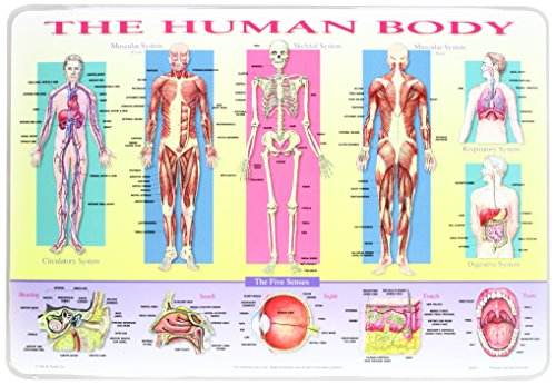 M. Ruskin HUM-1 Human Body PLACEMAT - Pack of 6