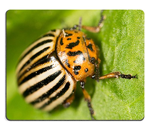 luxlady-mouse-pad-natural-rubber-mousepad-id-39777597-colorado-potato-beetle-on-a-green-leaf
