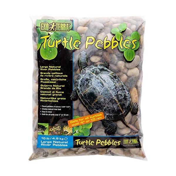 Exo Terra Turtle Pebbles 1