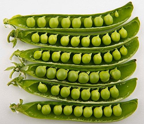 50 GREEN ARROW PEA Heirloom Shelling English