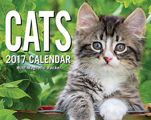 Cats 2017 Mini Day-to-Day Calendar 51NBLMV4hjL