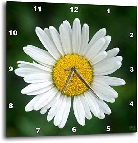 3dRose LLC Daisy 10 by 10-Inch Wall Clock