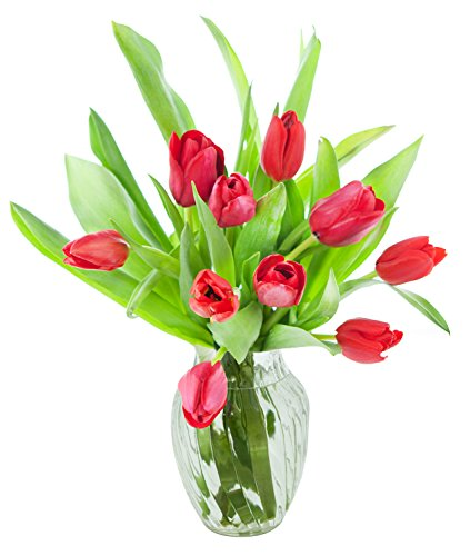 Holland Floral Vase (KaBloom 10 Red Tulips Fresh from Holland with Vase)