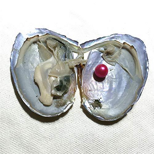 Amazon.com: XINNA - 15 ostras de perlas cultivadas en agua ...