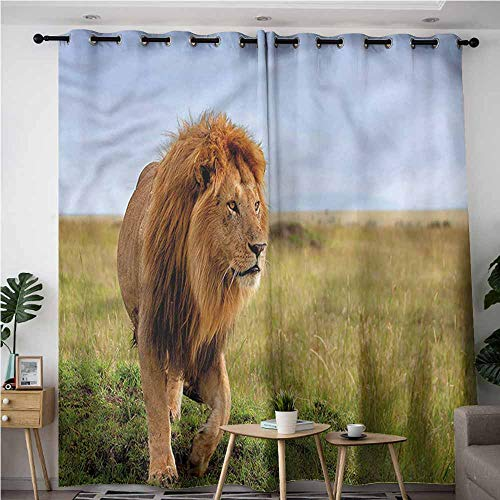 - Thermal Insulating Blackout Curtains,Lion Animal on Masai Mara Kenya,for Bedroom Grommet Drapes,W84x108L