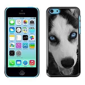 PC/Aluminum Funda Carcasa protectora para Apple Iphone 5C Husky Eyes Blue Face Muzzle Dog / JUSTGO PHONE PROTECTOR