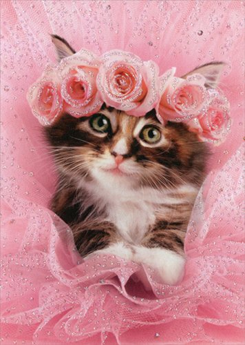 Kitten In Tutu - Avanti Cat Premium Valentine's Day Card