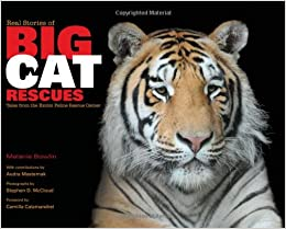real stories of big cat rescues tales from the exotic feline rescue