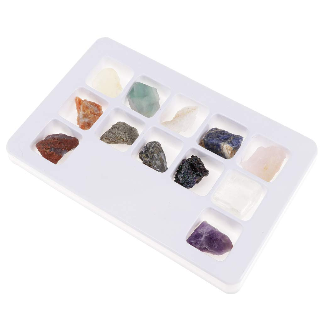 F Fityle 12pcs/Set Rocks and Minerals Collection PK546-2 Earth Science Toy School Teaching Tool