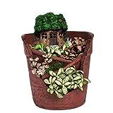 Miniature Fairy Garden Planter Flower Pot Sculpture Status Banyan Ficus Tree House Micro Landscape Resin Garden Flowerpot No Plants
