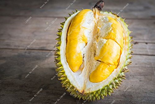 2016 new Delicious sweet snacks imported Durian seeds Tropical fruit Free Shipping 5pcs/bag SVI