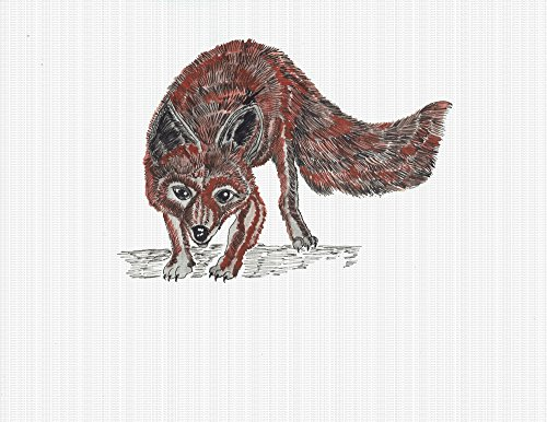 Print - Animal Red Fox 13