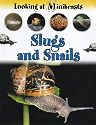 Slugs and Snails (Looking at Minibeasts)