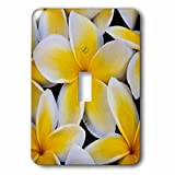 3dRose lsp_230738_1 USA, Hawaii, Oahu, Plumeria Flowers in Bloom Toggle Switch, Mixed
