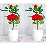 Litleo Artificial Rose Flower Plant with Pot, for Home Office or Gift Set of 2