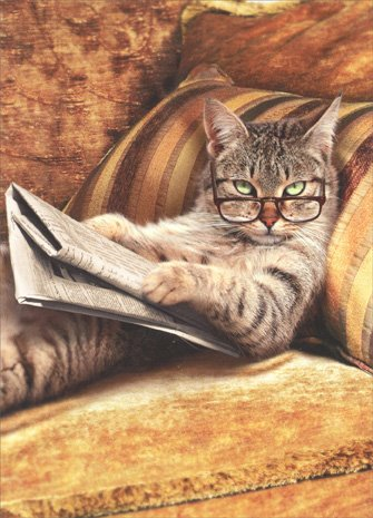 - Cat Reading Newspaper Funny Just For Fun Card