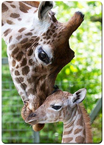Giraffe mom kisses fridge magnet