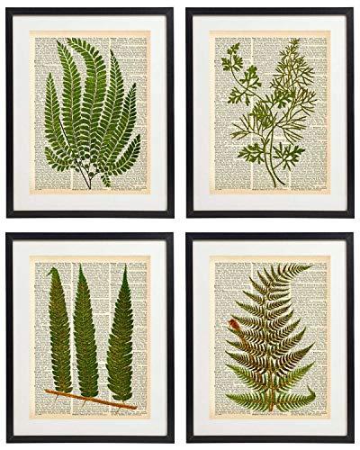 - IDIOPIX Fern Art Prints Vintage Botanical Wall Art Set of 4 Prints UNFRAMED 06