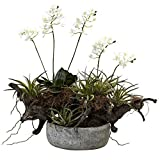 Nearly Natural 4839 Orchid and Succulent Garden Floral Arrangement Set with Driftwood and Decorative Vase