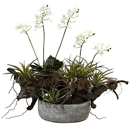 Nearly Natural 4839 Orchid and Succulent Garden Floral Arrangement Set with Driftwood and Decorative Vase by Nearly Natural