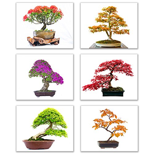 "Infinity Creations Inspirational Tree Wall Art - Bold, Beautiful, Bright Bonsai Trees (Set of 6): Art of Nature Decor Unframed Poster Prints (8""x10"")"