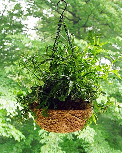 Burley Clay Hanging Nest Planter with Chain - Aged Brown