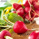 Pinkdose ZLKING Red Radish Vegetable Daucus Carota Delicious Sweet Vegetable 100 /Bag