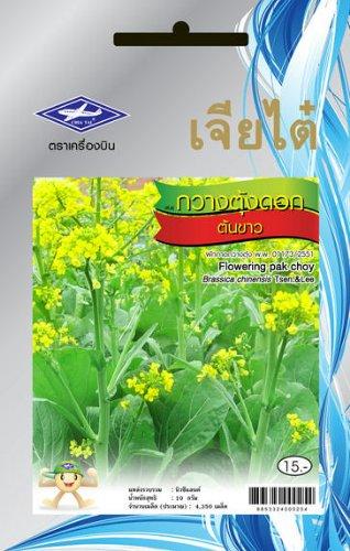 Amazon.com: Floración Choy Pak Bok Choi chino semillas de ...