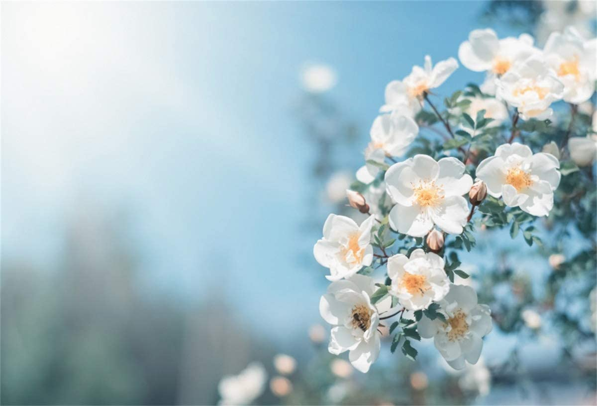YEELE 10x6.5ft Spring Photography Backdrop White Bush Roses in The Sunlight Blue Sky Background Nature Field Scenery Birthday Wedding Kids Girls Portrait YouTube Videos Photobooth Props Wallpaper