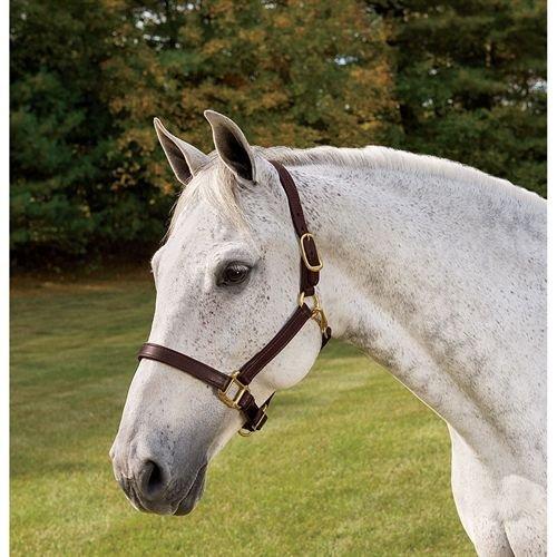 Perri's Horse Deluxe Turnout Halter, - Halter English
