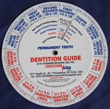 Dentition (Tooth Eruption) Guide/Practitioner