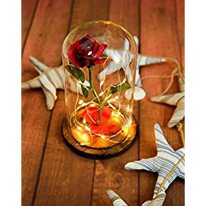 """Beauty and the Beast"" Everlasting Red Rose Flower Led Light with Fallen Petals in a Glass Dome on a Wooden Base 3"