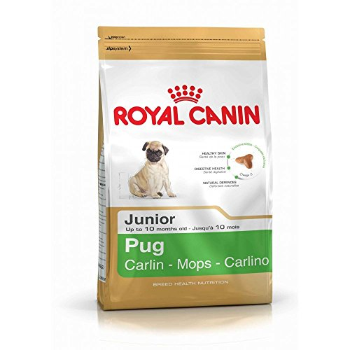 1.5kg Royal Canin Pug Junior Complete Dog Food