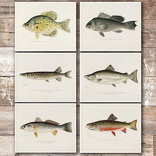 Vintage Fish Wall Art Prints (Set of 6) - Unframed - 8x10s   Fishing Decor