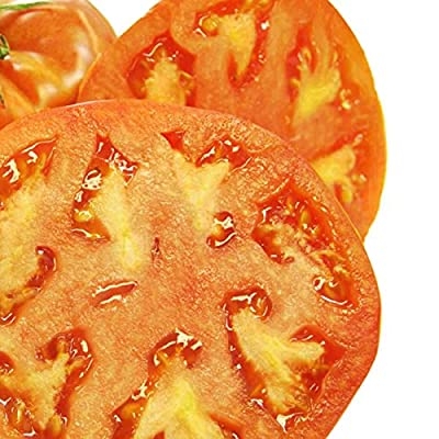 Tomato Garden Seeds - Hamson (DX-52-12) - Non-GMO, Heirloom, Vegetable Gardening Seed