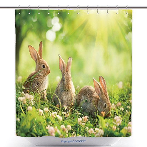 Kmart Polyester Shower Curtain (vanfan-Polyester Shower Curtains Rabbits Beauty Art Design Of Cute Little Easter Bunny In The Meadow Spring Flowers And Green Polyester Bathroom Shower Curtain Set With Hooks(36 x 72 inches))