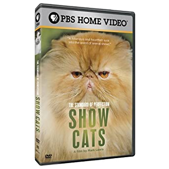amazon com the standard of perfection show cats movies tv