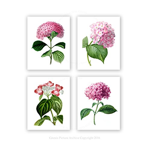 Spring Pink Hydrangea Floral Botanical Prints Wall Art